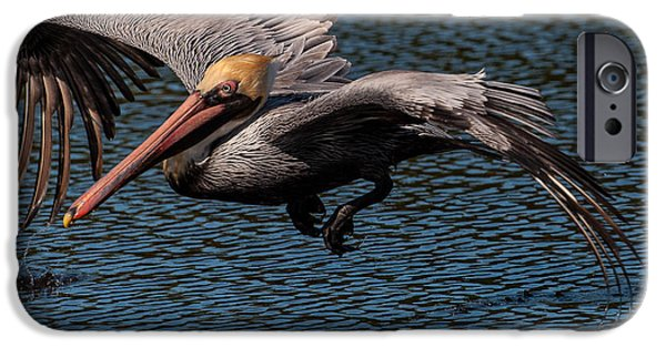 Wing Dipper IPhone Case by Robert Panozzo