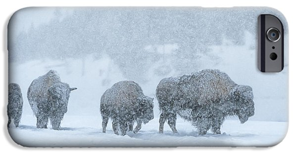 Winter's Burden IPhone Case by Sandra Bronstein