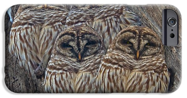 Wintry Barred Owls   IPhone Case by Betsy C Knapp