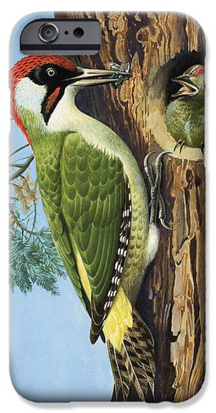 Woodpecker IPhone Case by RB Davis