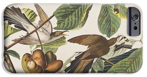 Yellow Billed Cuckoo IPhone 6s Case by John James Audubon