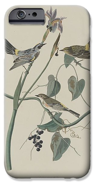 Yellow-crown Warbler IPhone Case by John James Audubon