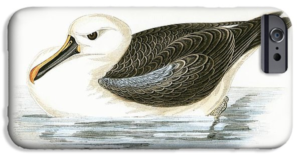 Yellow Nosed Albatross IPhone 6s Case by English School