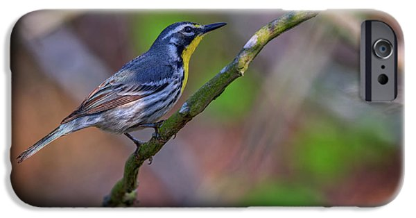 Yellow-throated Warbler IPhone Case by Rick Berk