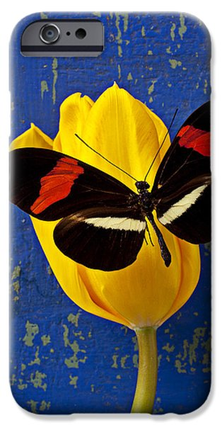 Yellow Tulip With Orange And Black Butterfly IPhone 6s Case by Garry Gay