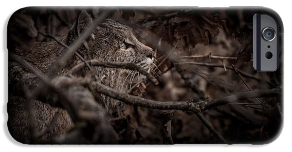 Yosemite Bobcat  IPhone Case by Ralph Vazquez