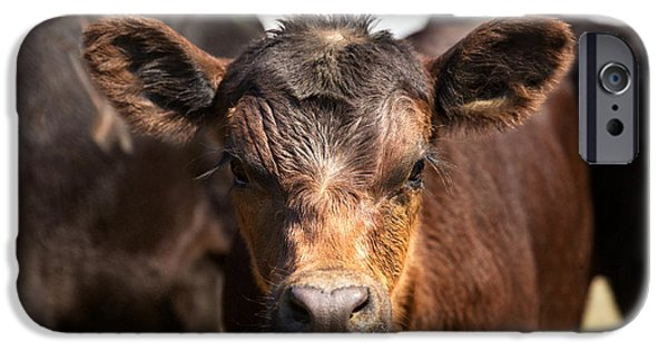 Young Angus IPhone Case by Todd Klassy