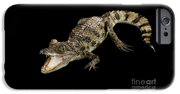 Young Cayman Crocodile, Reptile With Opened Mouth And Waved Tail Isolated On Black Background In Top IPhone 6s Case by Sergey Taran