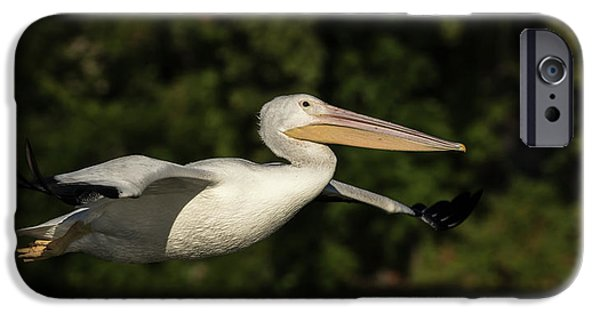 Young Pelican 2016-2 IPhone Case by Thomas Young