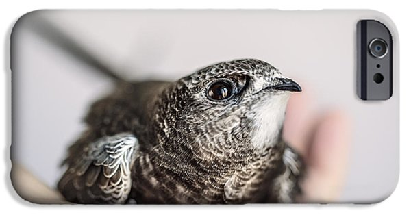 Young Swift IPhone Case by Nailia Schwarz
