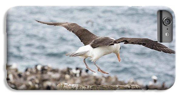 A Black Browed Albatross IPhone 6s Plus Case by Ashley Cooper