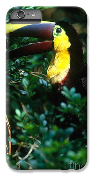 Chestnut-mandibled Toucan IPhone 6s Plus Case by Art Wolfe