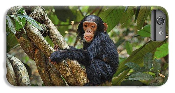 Chimpanzee Baby On Liana Gombe Stream IPhone 6s Plus Case by Thomas Marent