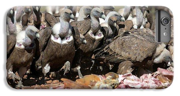 Griffon Vultures Feeding IPhone 6s Plus Case by Nicolas Reusens