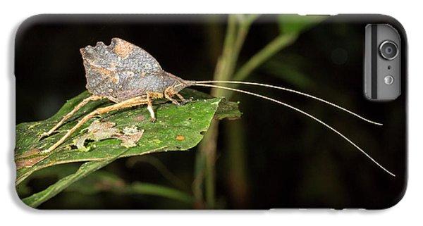 Leaf Mimic Katydid IPhone 6s Plus Case by Dr Morley Read
