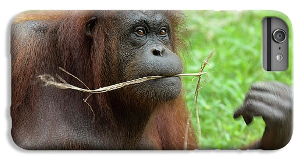 Malaysia, Borneo, Sabah, Kota Kinabalu IPhone 6s Plus Case by Cindy Miller Hopkins