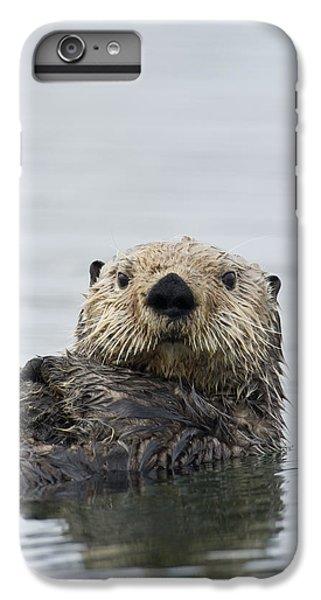Sea Otter Alaska IPhone 6s Plus Case by Michael Quinton