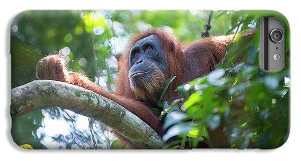 Sumatran Orangutan IPhone 6s Plus Case by Scubazoo