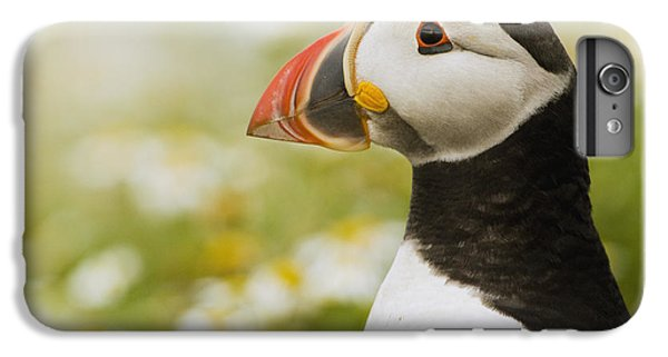 Atlantic Puffin In Breeding Plumage IPhone 6s Plus Case by Sebastian Kennerknecht