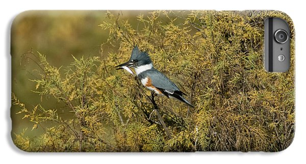 Belted Kingfisher With Fish IPhone 6s Plus Case by Anthony Mercieca