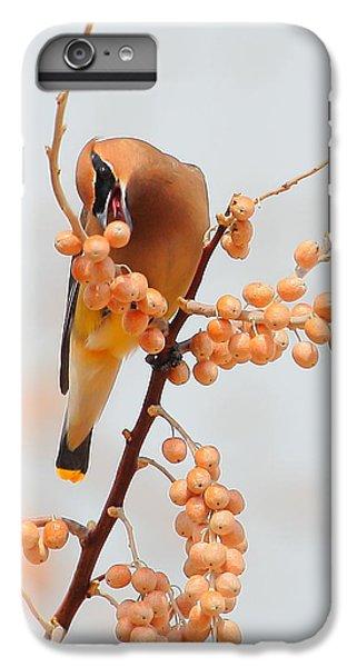 Cedar Wax Wing IPhone 6s Plus Case by Floyd Tillery