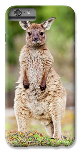 Western Grey Kangaroo (macropus IPhone 6s Plus Case by Martin Zwick