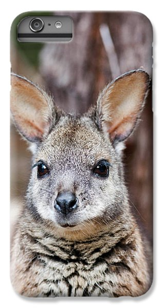 Tammar Wallaby (macropus Eugenii IPhone 6s Plus Case by Martin Zwick