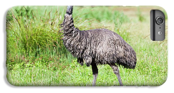 Emu (dromaius Novaehollandiae IPhone 6s Plus Case by Martin Zwick
