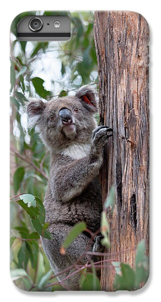 Koala (phascolarctos Cinereus IPhone 6s Plus Case by Martin Zwick