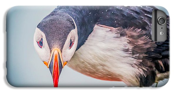 Atlantic Puffin Fratercula Arctica IPhone 6s Plus Case by Panoramic Images