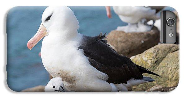Black-browed Albatross (thalassarche IPhone 6s Plus Case by Martin Zwick