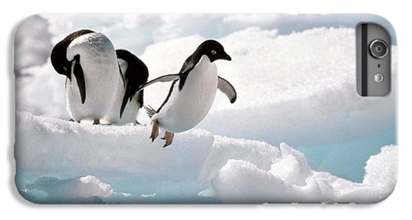 Adelie Penguins IPhone 6s Plus Case by Art Wolfe