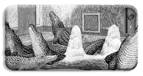 Alligators In Captivity IPhone 6s Plus Case by Science Photo Library