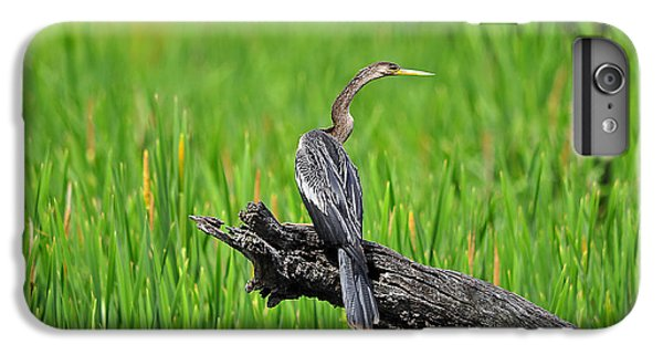 American Anhinga IPhone 6s Plus Case by Al Powell Photography USA