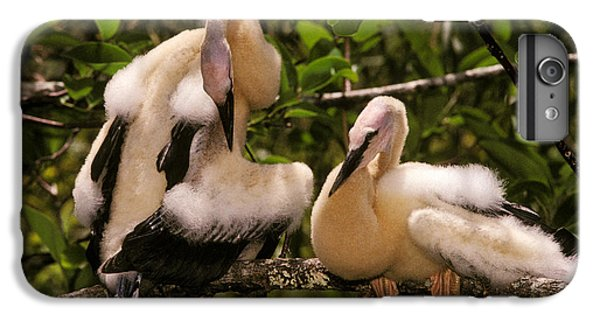 Anhinga Chicks IPhone 6s Plus Case by Ron Sanford