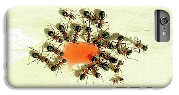 Ants Feeding IPhone 6s Plus Case by Heiti Paves