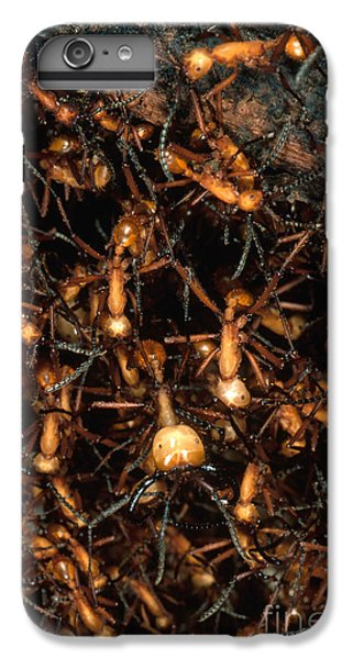 Army Ant Bivouac Site IPhone 6s Plus Case by Gregory G. Dimijian, M.D.