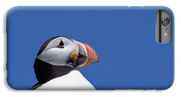 Atlantic Puffin In Breeding Colors IPhone 6s Plus Case by