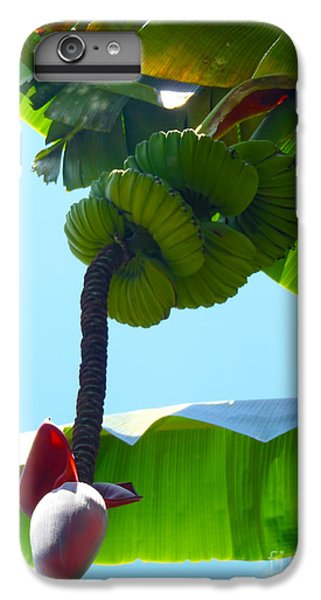 Banana Stalk IPhone 6s Plus Case by Carey Chen