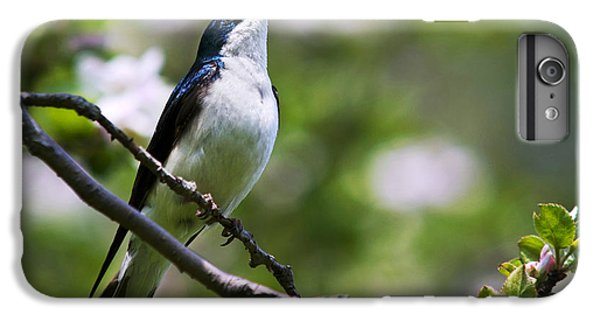 Swallow Song IPhone 6s Plus Case by Christina Rollo