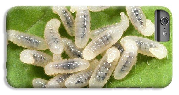 Black Garden Ant Larvae IPhone 6s Plus Case by Nigel Downer