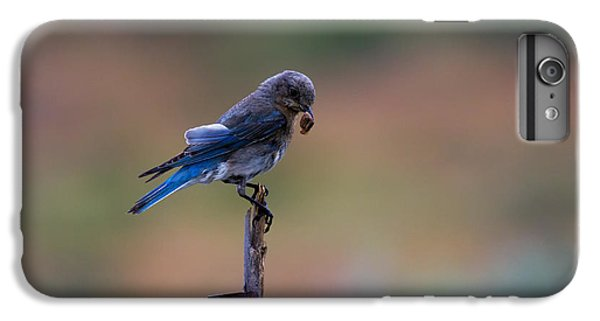 Bluebird Lunch IPhone 6s Plus Case by Mike  Dawson