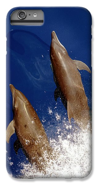 Bottlenose Dolphins Tursiops Truncatus IPhone 6s Plus Case by Anonymous