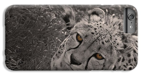 Cheetah Eyes IPhone 6s Plus Case by Martin Newman
