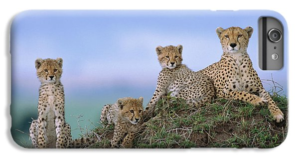Cheetah Mother And Cubs Masai Mara IPhone 6s Plus Case by Yva Momatiuk John Eastcott