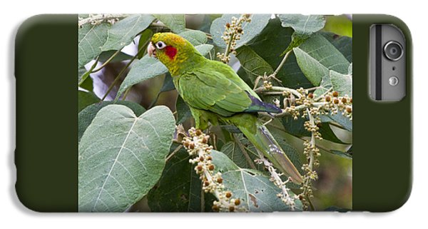Chiriqui Conure 2 IPhone 6s Plus Case by Heiko Koehrer-Wagner