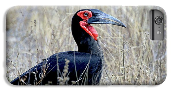 Close-up Of A Ground Hornbill, Kruger IPhone 6s Plus Case by Miva Stock
