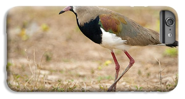 Close-up Of A Southern Lapwing Vanellus IPhone 6s Plus Case by Panoramic Images