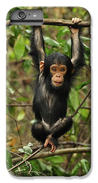 Eastern Chimpanzee Baby Hanging IPhone 6s Plus Case by Thomas Marent