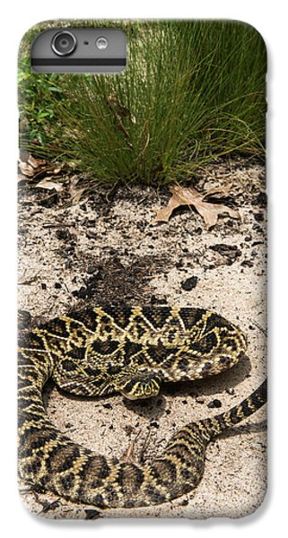 Eastern Diamondback Rattlesnake IPhone 6s Plus Case by Pete Oxford